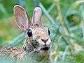 Rabbit Looks Surprised by Monique Haen.jpg