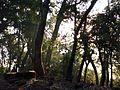 Radanagari forest maharashtra.jpg