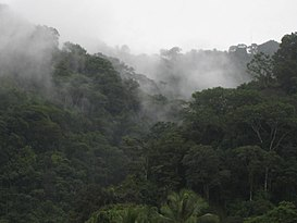 Rainforest near Golfito, Costa Rica.jpg