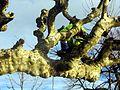 Rapperswil - Hafen 2012-01-03 15-14-00 (SX230).JPG