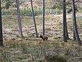 Red Deer - geograph.org.uk - 317999.jpg