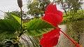 Red Flower in Nepal.jpg