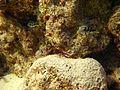 Reef2147 - Flickr - NOAA Photo Library.jpg
