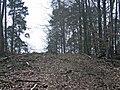 Reh im Stadtwald von Böblingen - panoramio.jpg