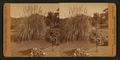 Residence of Wm. C. Ralston, Belmont Cal, from Robert N. Dennis collection of stereoscopic views.png