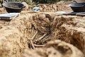 Restes òssies de la fossa de Rams exhumada a Vilanova de Meià.jpg