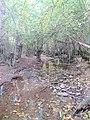 Rio Cidacos en otoño.jpg