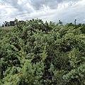 Riserva Naturale Orientata di Vendicari, Italia - panoramio (5).jpg