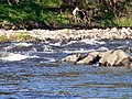 River Ribble - geograph.org.uk - 75039.jpg