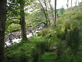 River Ure - Image: River Ure geograph.org.uk 188096