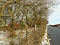 Road to Beecraigs - geograph.org.uk - 1147867.jpg