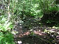 Rocky stream - June 2011 - panoramio.jpg