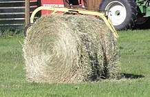 Hay Is Gr Legumes Or Other Herbaceous Plants That Have Been Cut Dried And D For Use As Animal Fodder Particularly Grazing Animals Such