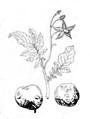 Roze fig.13 et 14.png