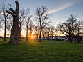 Ruskin Park at sunset (12036894813).jpg