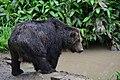 Sahoro Resort Bear Mountain サホロリゾート ベアマウンテン11.jpg