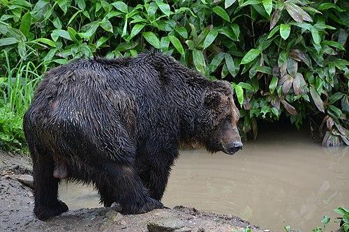 500px sahoro resort bear mountain サホロリゾート ベアマウンテン11