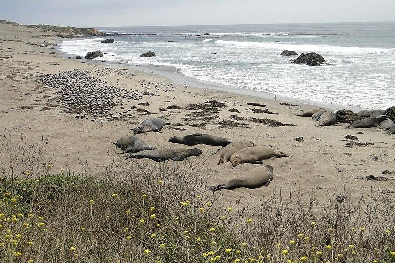 File:San Luis Obispo-Paso Robles, CA, CA, USA - panoramio (1).jpg