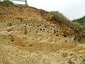 Sandmartins at Thorpeness, Suffolk - geograph.org.uk - 42939.jpg