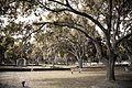 Sarasota Memorial-4635.jpg