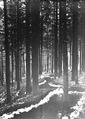 Schützengrabenim Wald - CH-BAR - 3240433.tif