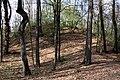 Schandorf - Tumulis in Bauernwald I (02).jpg