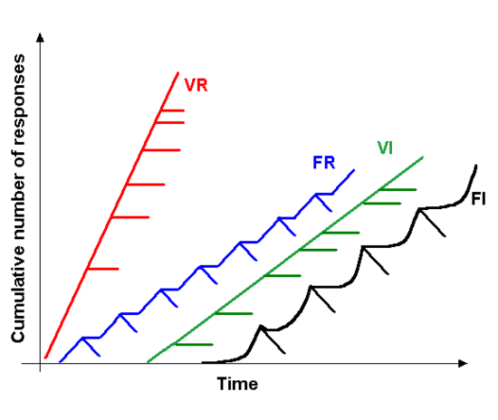 A chart demonstrating the different response rate of the four simple schedules of reinforcement, each hatch mark designates a reinforcer being given Schedule of reinforcement.png