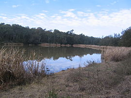 Scheyville national park longneck lagoon north swamp.jpg
