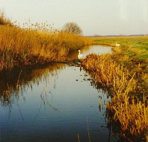 Share Marsh, Near Oulton Broad - geograph.org.uk - 40549