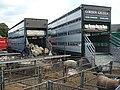 Sheep at Newport Cattle Market - geograph.org.uk - 995452.jpg