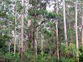 Sheldon Forest Australia.JPG