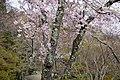 Shojiji Kyoto Japan12s3s4592.jpg