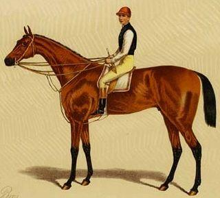 Silvio (horse) horse born in 1874