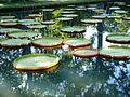 Sir Seewoosagur Ramgoolam Botanical Gardens, Mauritius.JPG