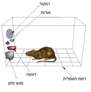 Skinner box hebrew.png