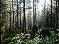 Snohomish County, WA, USA - panoramio.jpg