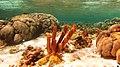 Snorkeling Lac Bay, Bonaire (12841798505).jpg