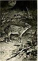 Sport on the Nilgiris and in Wynaad (1911) (14782479555).jpg
