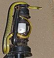 Spotted Bush-Snake (Philothamnus semivariegatus) visiting my kitchen (12931947275).jpg