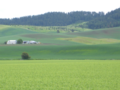 Spring-wheat-farm-latah-id.png