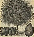 Spring 1898 - Parrys' Pomona Nurseries (1898) (20383879188).jpg