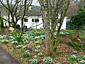 Spring at Airds Wood - geograph.org.uk - 714352.jpg