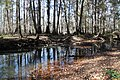 Spring creek 4 (6466596655).jpg