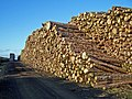 Stacked logs - geograph.org.uk - 1539102.jpg