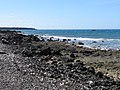 Starr-170919-0205-Capparis sandwichiana-view ocean lava tour boat-La Perouse-Maui - Flickr - Starr Environmental.jpg
