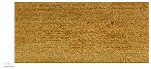 Sterculia - S. pruriens, wood texture – MHNT
