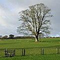 Stile and Oak Tree in Fields by Larden Grange, Shropshire - geograph.org.uk - 672875.jpg