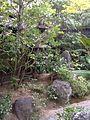 Stone tawer11.jpg