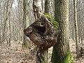 Strange Deformation - Vreemde Vervorming - panoramio - Hänsel und Gretel.jpg