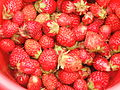 Strawberries 24 August 2007-1.JPG